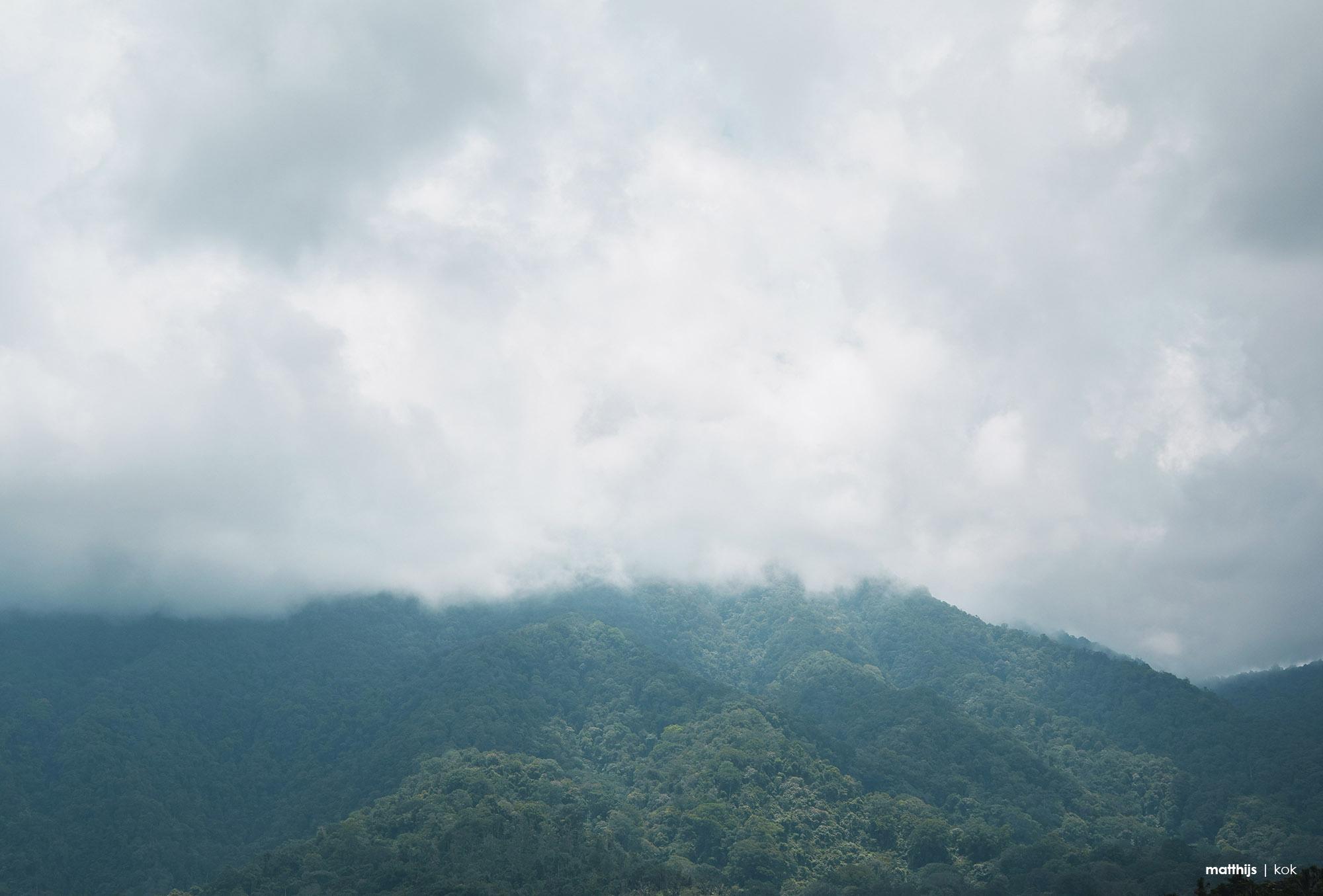 Rain Forest, Bali | Photo by Matthijs Kok
