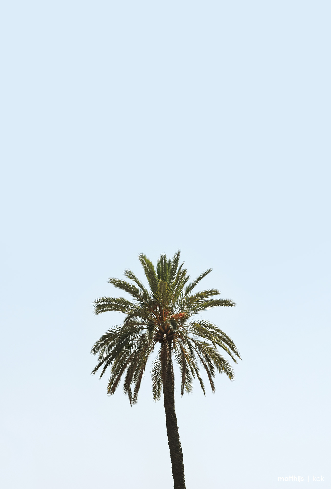 Palm, Marrakech | Photo by Matthijs Kok