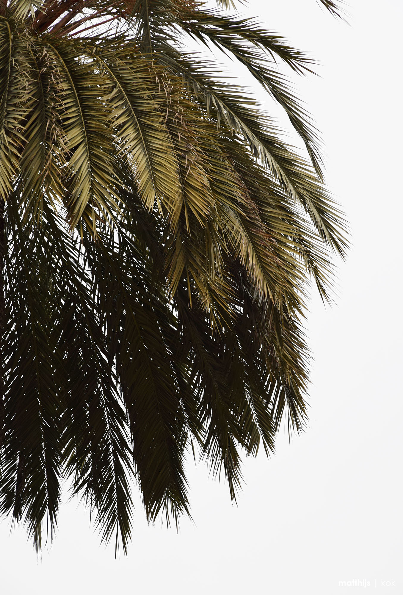 Palm, Barcelona, Spain | Photo by Matthijs Kok